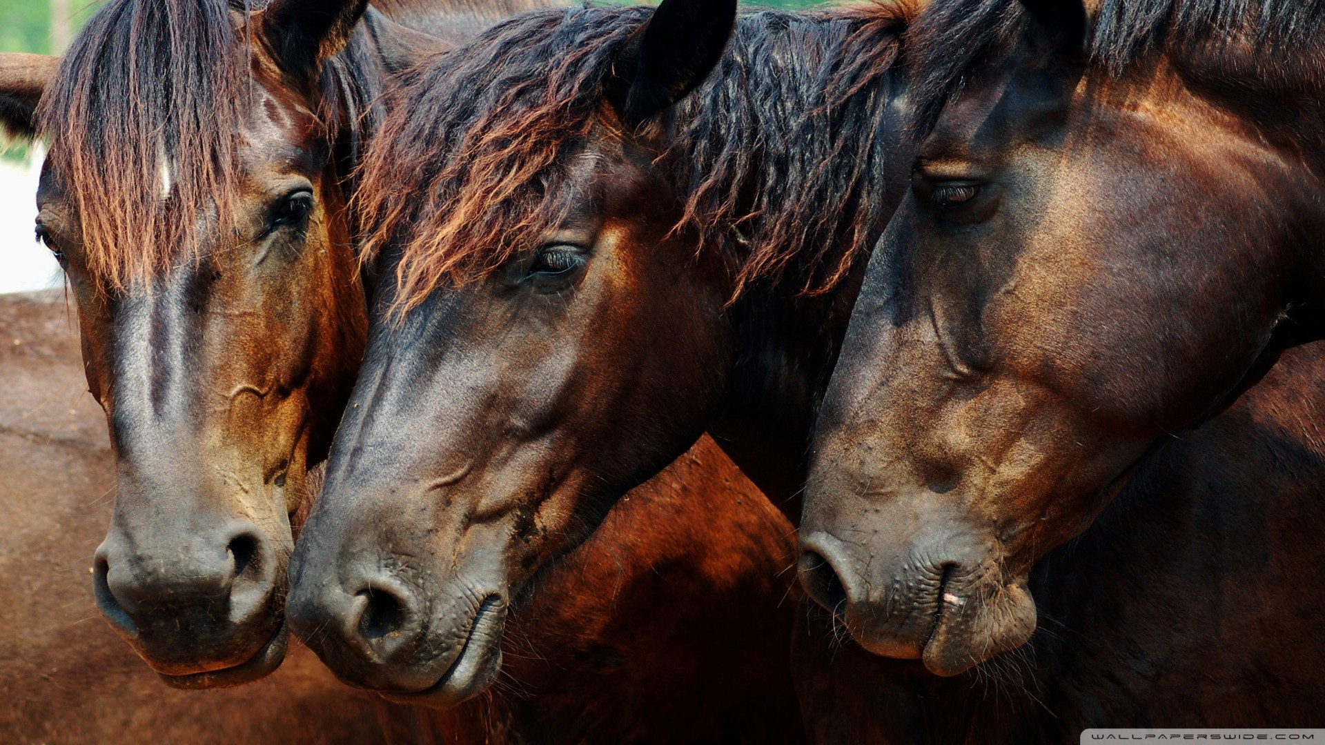 Etologia applicata all'Equitazione Moderna